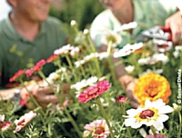 Jardiland renouvelle ses ateliers de jardinage